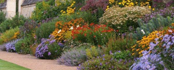 Какие растения высаживают в миксбордере
