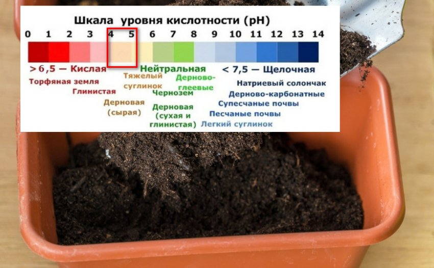 Кислотность почвы для рододендрона