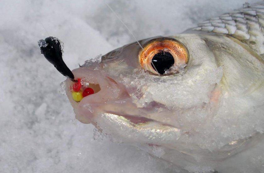 Зимняя ловля на безмотылку