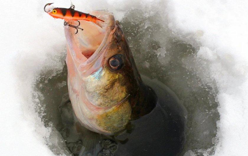 Пластиковый балансир на рыбалке