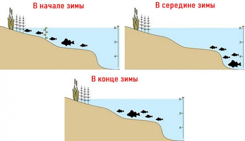 Миграция окуня зимой