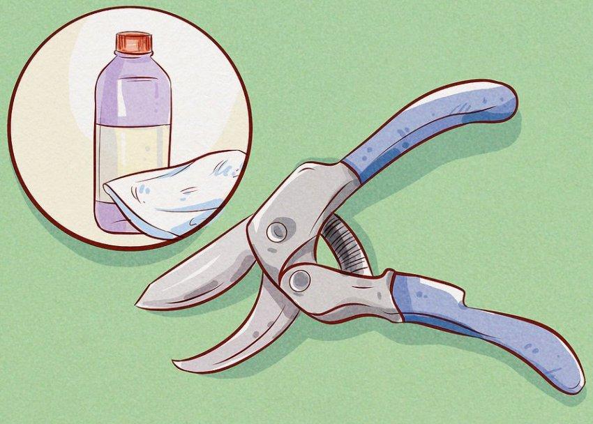 Дезинфекция инструментов перед обрезкой кустарника