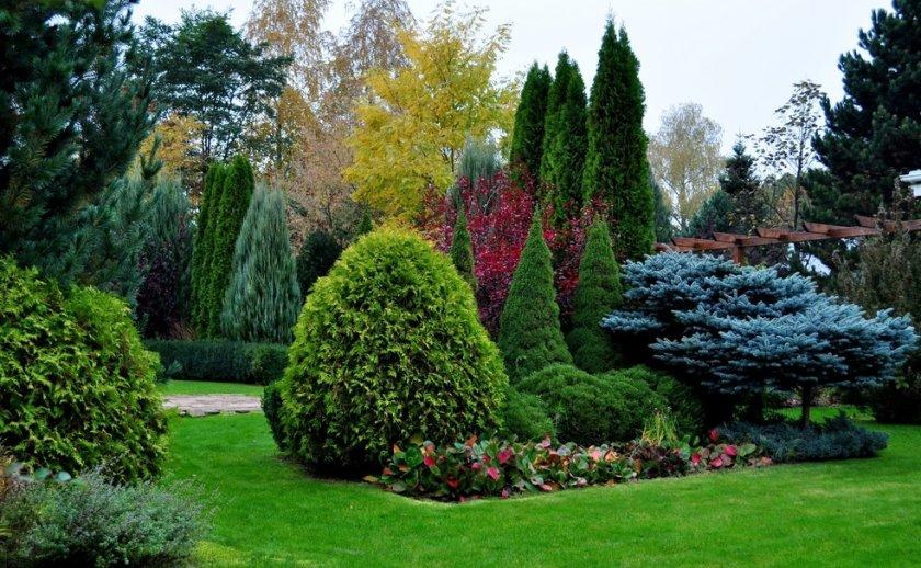 Ландшафтный дизайн из хвойных деревьев