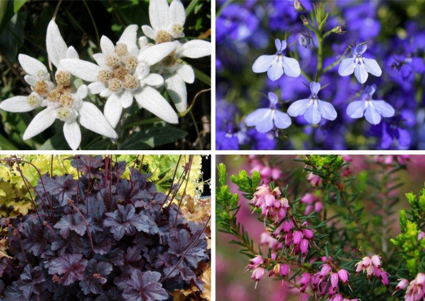 Сочетание с цветами