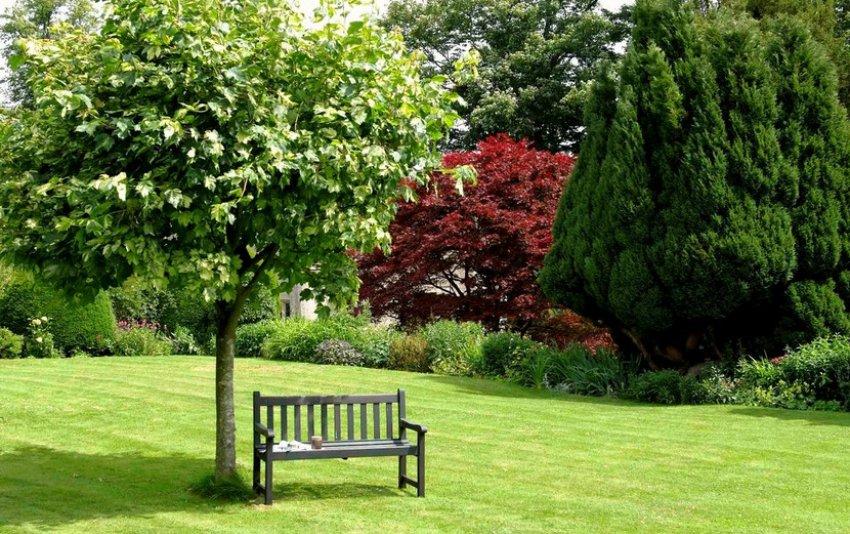 Отдельные деревья в саду