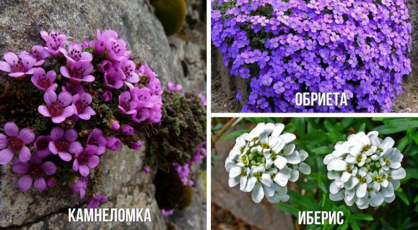 Стелющиеся растения