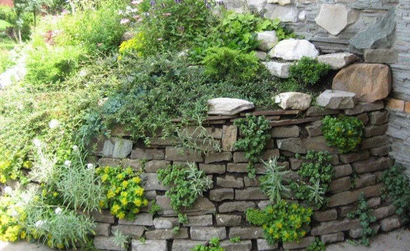 Альпинарий-стена