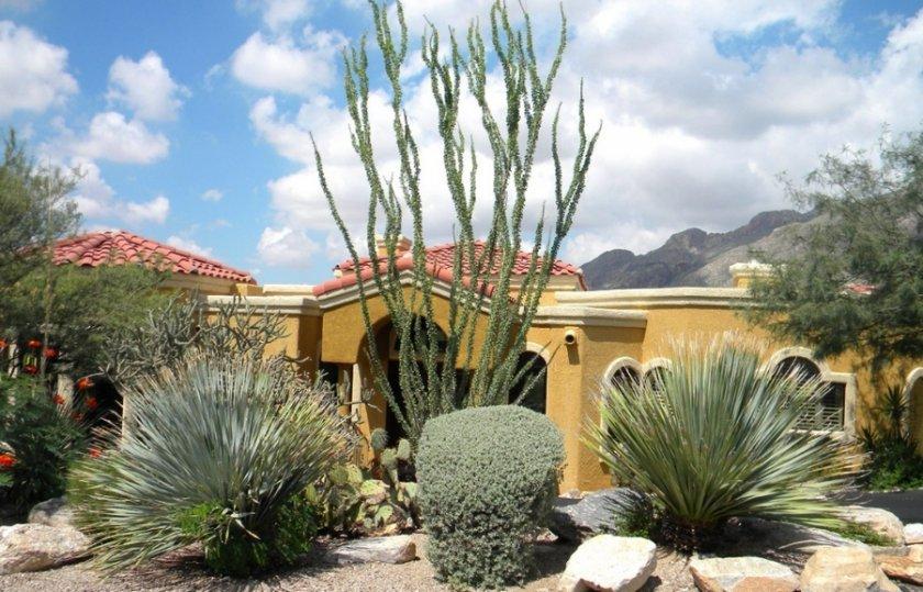 Пустынный стиль в ландшафтном дизайне