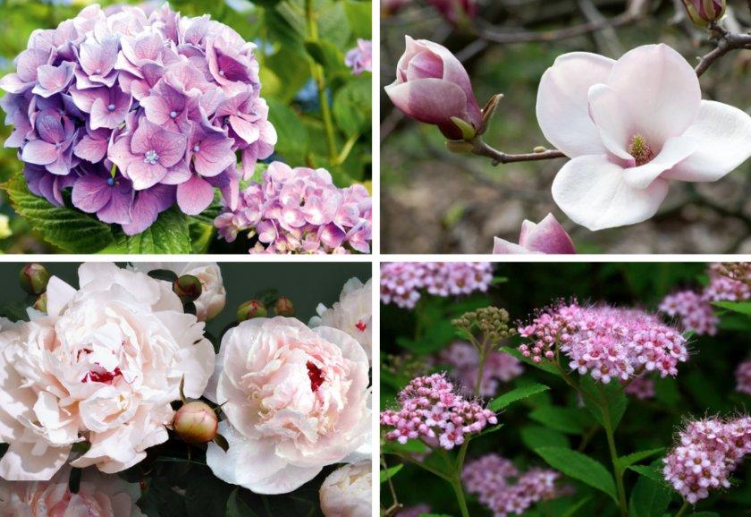 Цветы которые хорошо растут на участке