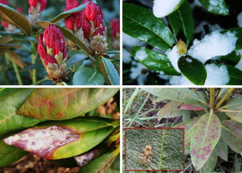 Причины отсутствия цветения