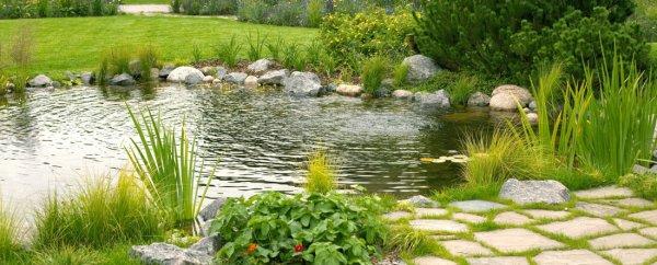 Обустройство прудов и водоемов