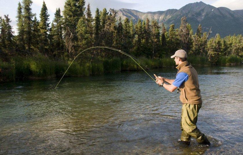 картинка ловят рыбу сад