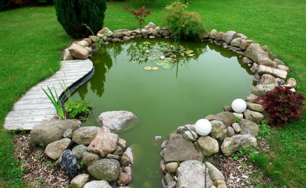 Рыба для пруда: 10 видов и 6 советов