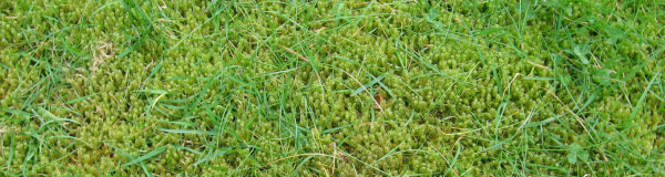 Удобрение от мха на газоне