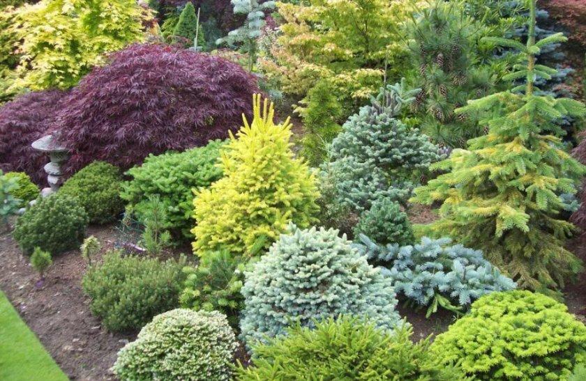 Карликовые хвойные растения в ландшафтном дизайне