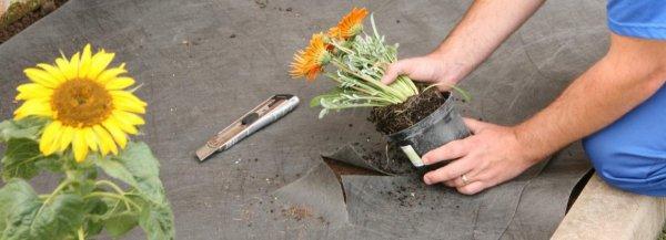Использование геотекстиля в ландшафтном дизайне: какой лучше использовать от сорняков для клумб, ткань и материал подложки под щебенку, фото