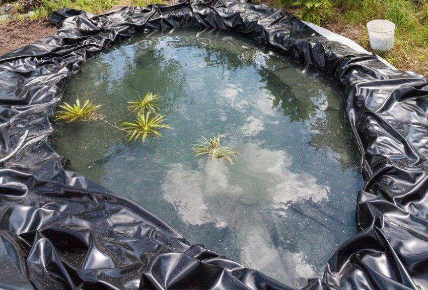 Вода в пруду