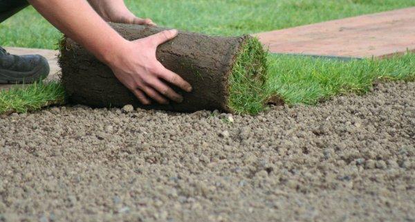 Как правильно подготовить участок перед посевом газона