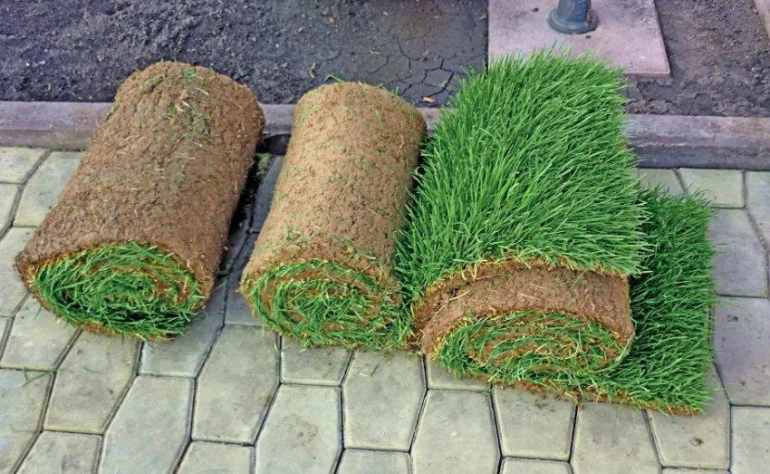Готовый травяной покров