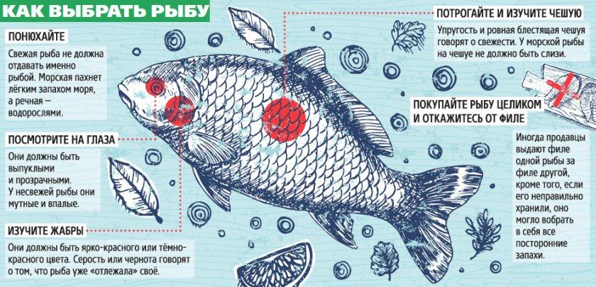 Критерии определения свежести рыбы
