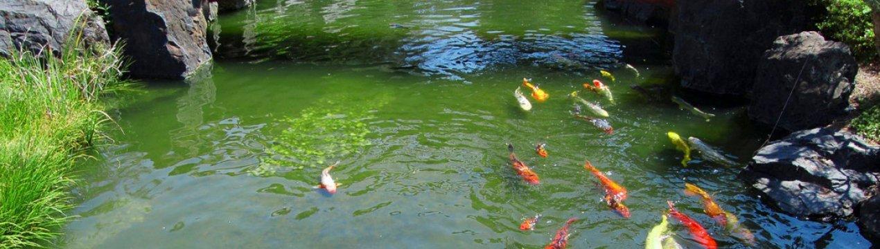 Строительство пруда для разведения рыбы и купания