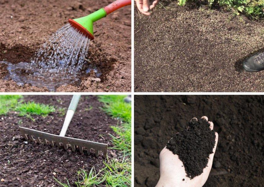 Пошаговое руководство по посеву семян