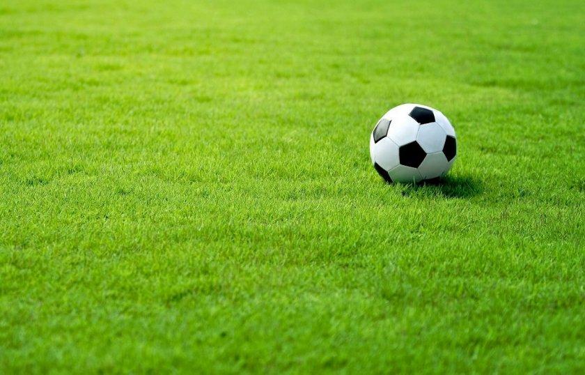 Спортивный газон