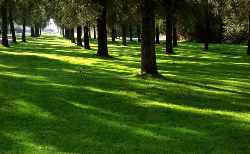 Теневыносливый газон