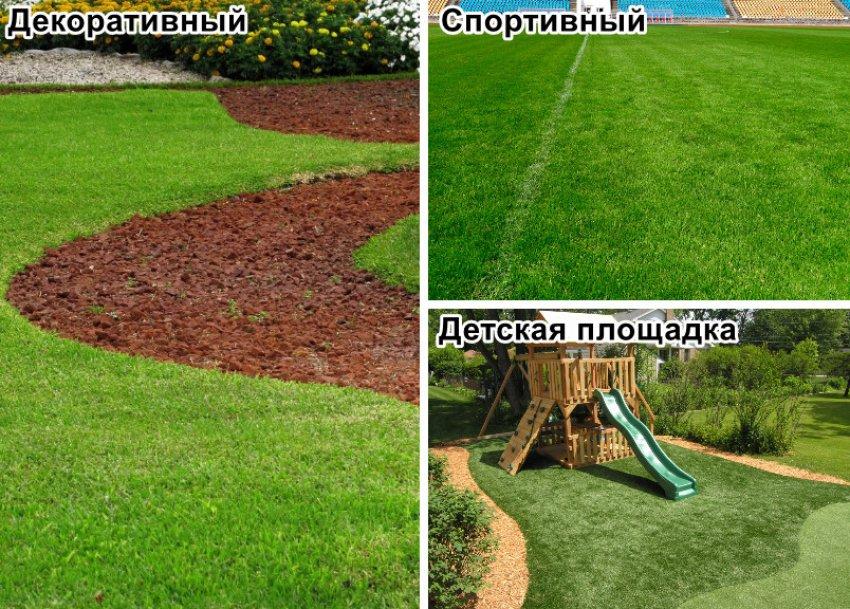 Типы газонов