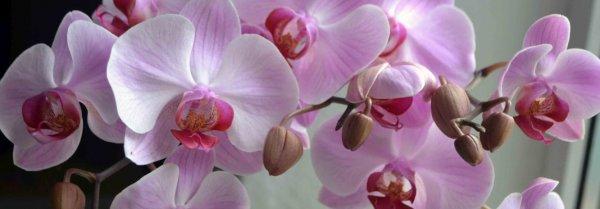 Признаки болезни орхидеи