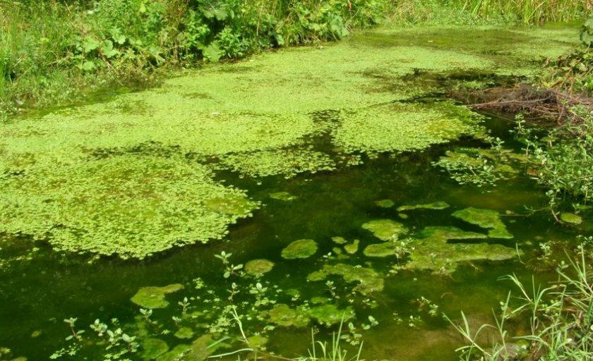 Загрязнённый пруд
