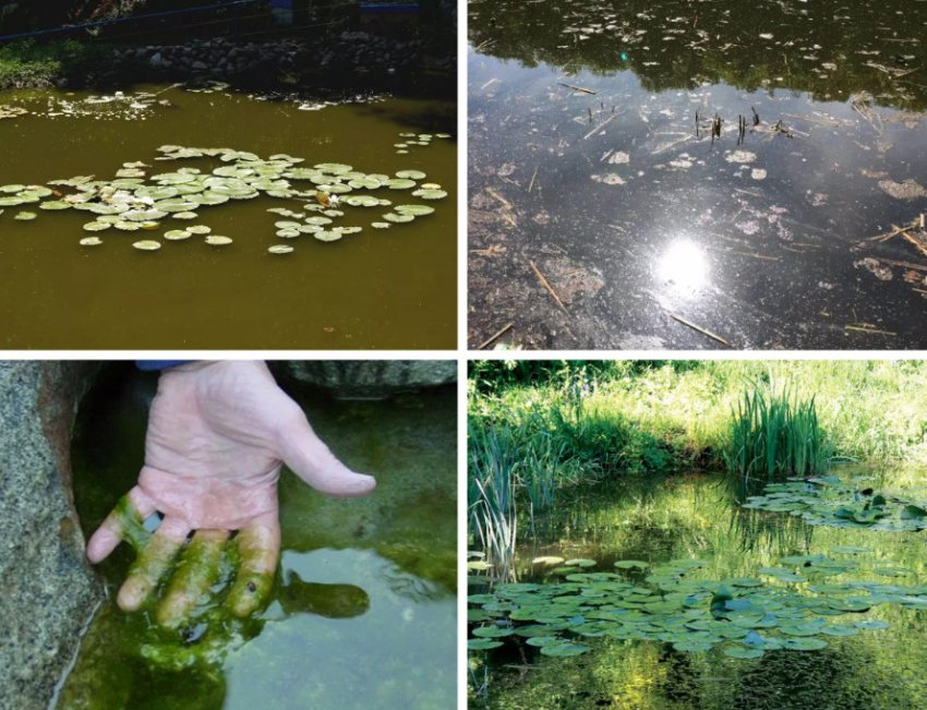 Признаки загрязнения пруда