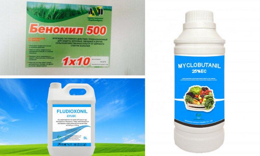 Препараты против грибковых заболеваний