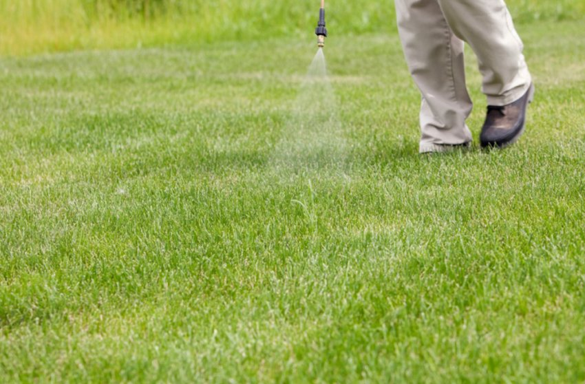 Обработка газона гербицидами