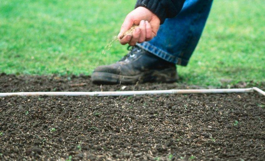 Посев травы