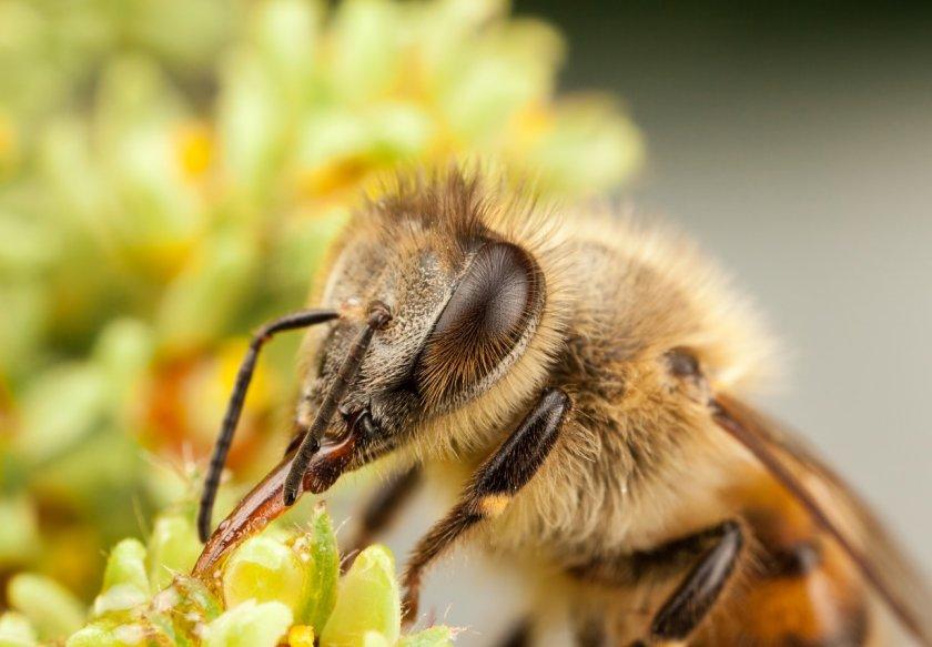 Ярославские аграрии подружатся с пчеловодами