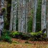 Сколько лет живет ель Средняя продолжительность жизни Как определить возраст хвойного дерева Максимальный срок жизни ели обыкновенной
