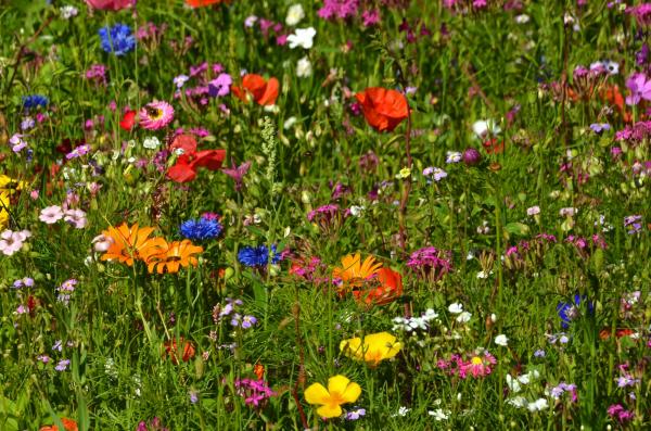 Дизайн газона с цветами