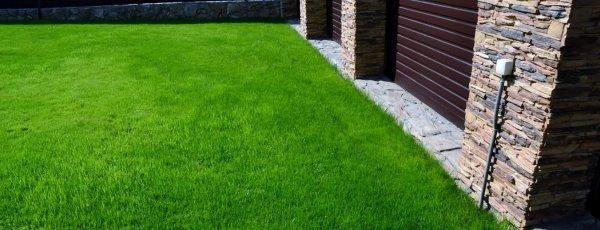 Овсянник трава