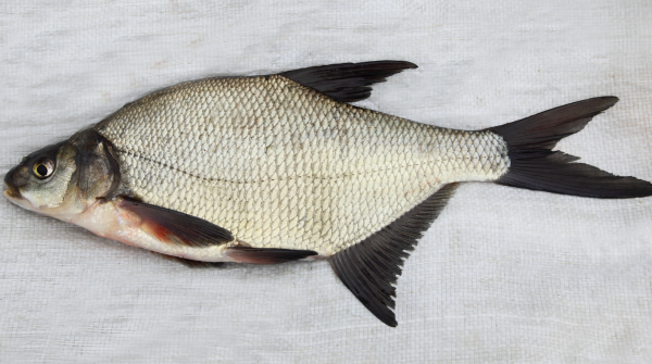 Как чистить рыбу 🚩 как чистят рыбу 🚩 Еда 🚩 Популярное