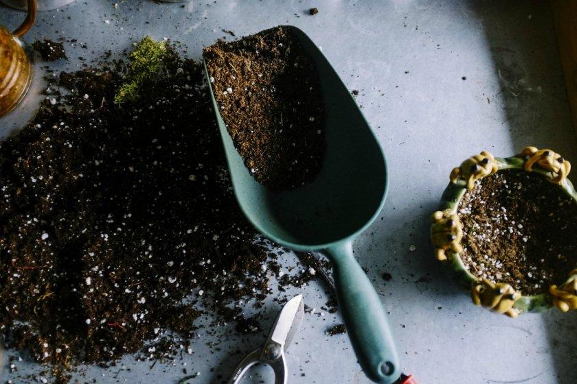 Покупной гпунт для комнатных растений