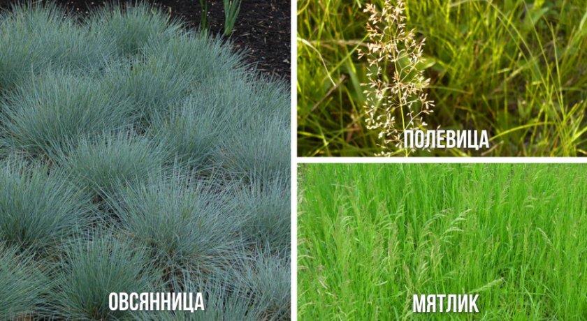 Трава для обыкновенного газона