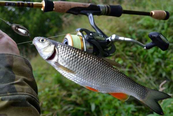 Как ловить голавля? Рыбалка на голавля: оснастка