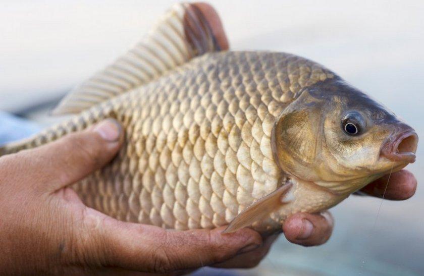 Рыболовная снасть пробка и ловля рыбы на неё