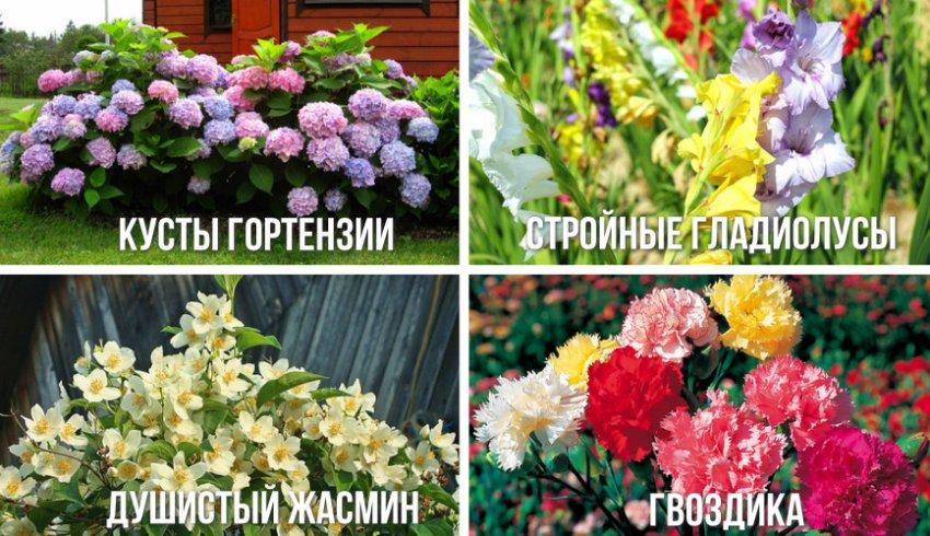 Растения для дизайна участка