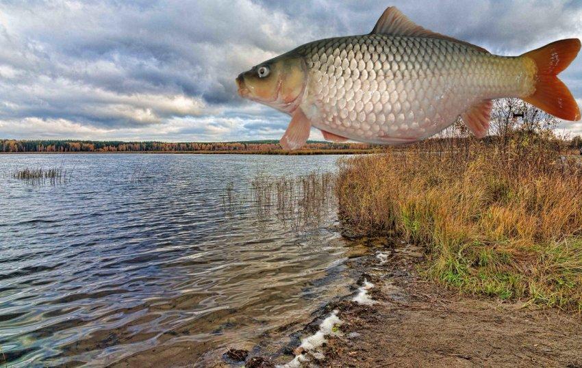Ловля карася на озере Булдым