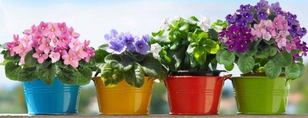 Горшки для фиалок - уход в домашних условиях, какие горшки выбрать и как посадить