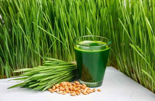 Зеленый сок из ростков пшеницы