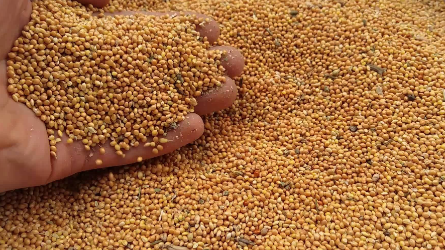 семена эспарцета посев кг на 1 га