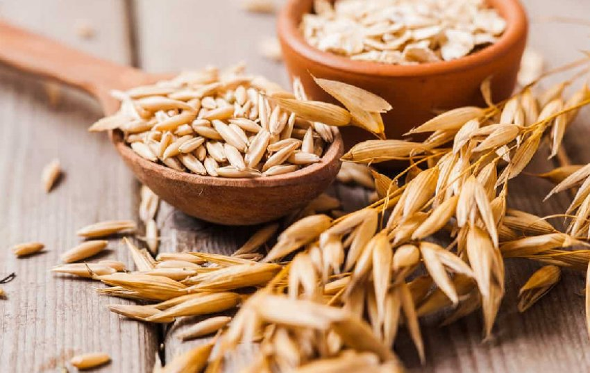 Овсяное зерно